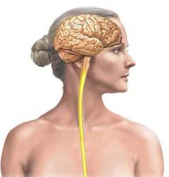 multiple-sclerosis 1