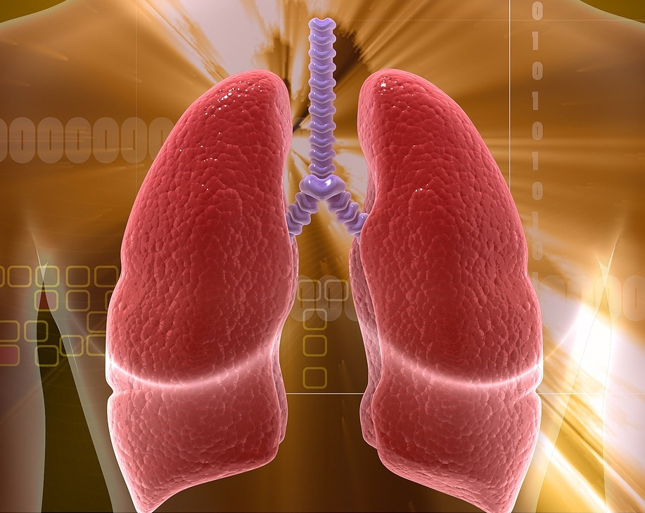 Human-Lungs3-e1351684362308