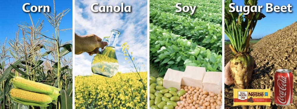 GMO-Crops-4-Canada.jpg