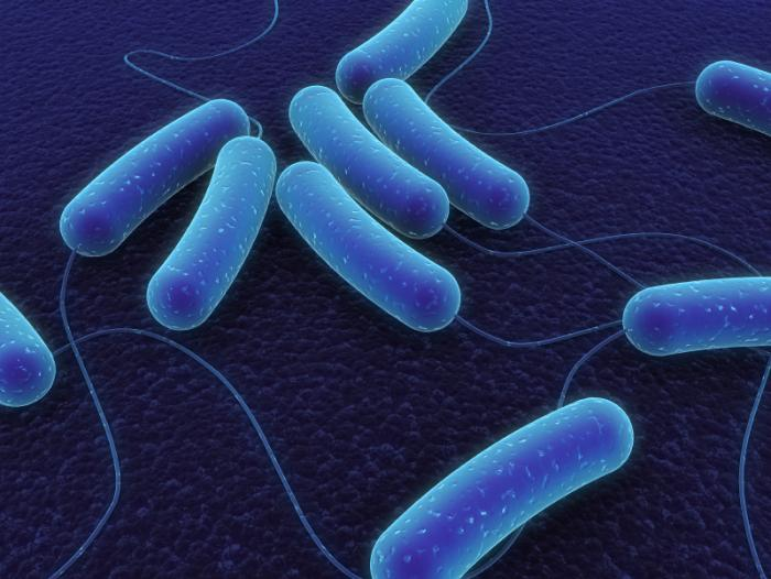 bacteriadhgidsg