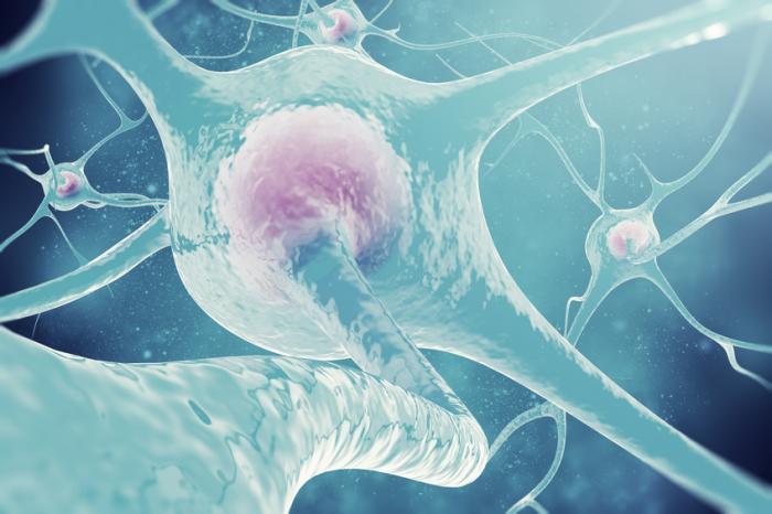 nerve-cells